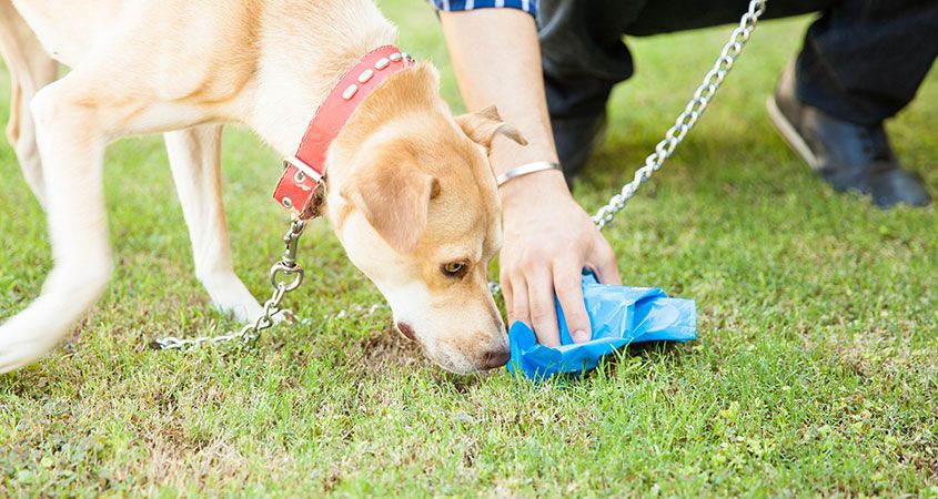 The-scoop-in-the-poop-Your-dog's-health-secrets