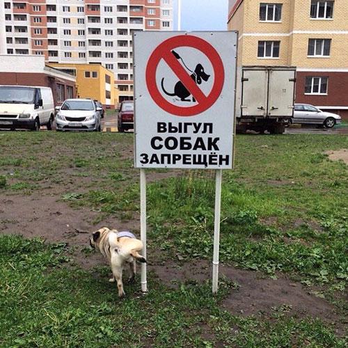 dog-poop-6