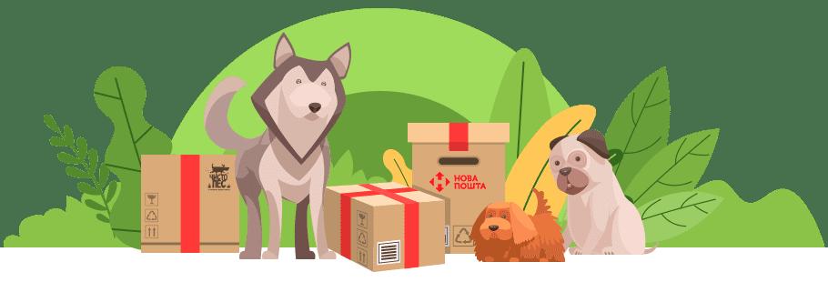 free-shiping